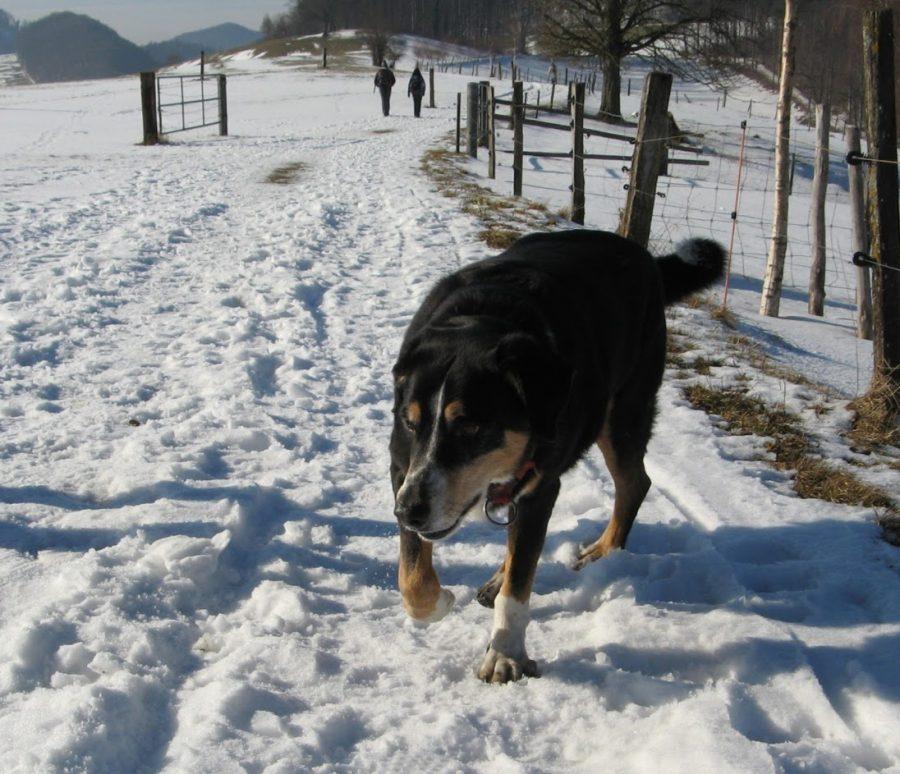 Winterwanderung Aargau