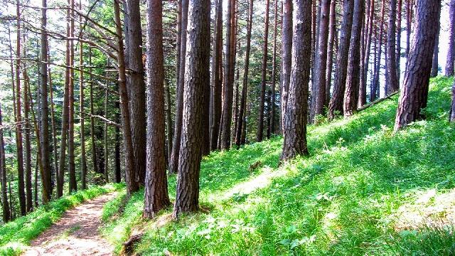 Heilkraft des Waldes