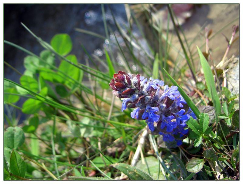 Frühling im Tösstal, Wandern Zürcher Oberland