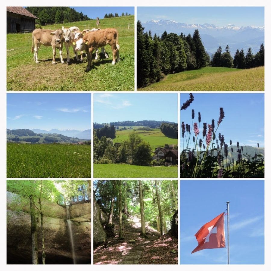 Wanderung Zürcher Oberland Bachtel
