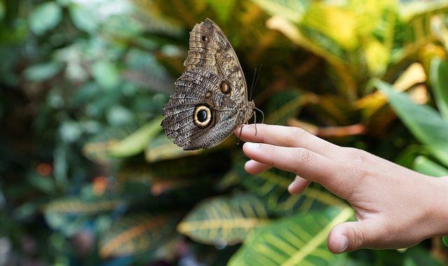 Schmetterling, Papiliorama Kerzers