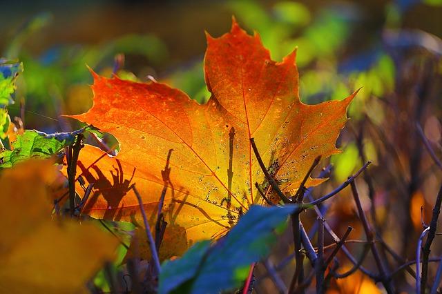 autumn-2749286_640