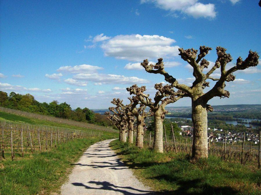 Wandern am Rhein, Flusswanderung im Frühling,