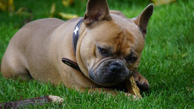 Wandergruppe Hund Schweiz