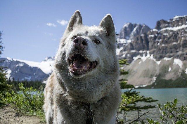 Hundwanderungen Schweiz