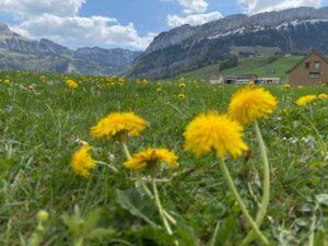 Wandern in Appenzell